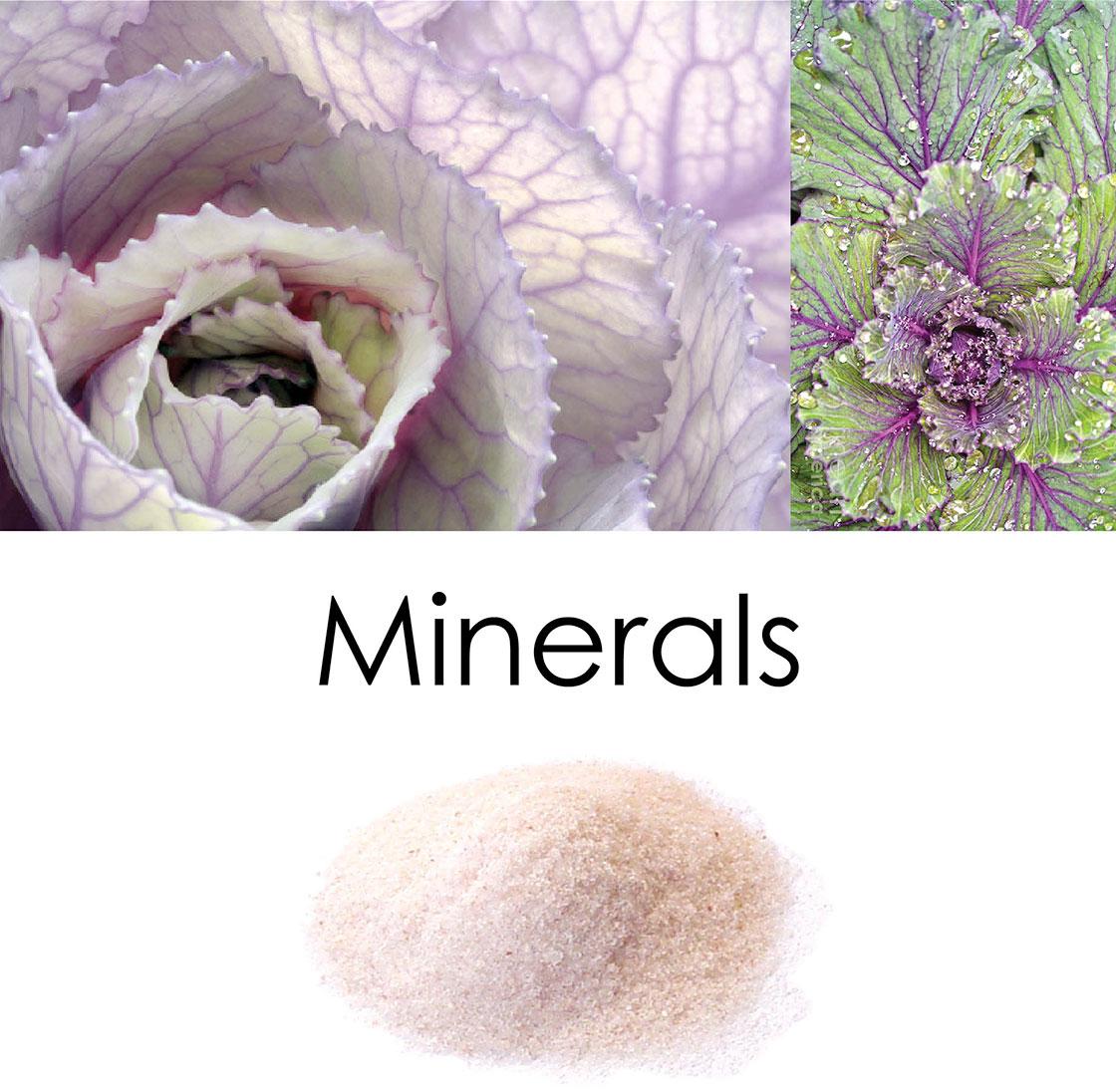 minerals-top2